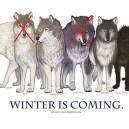 Lobos huargo – Casa Stark